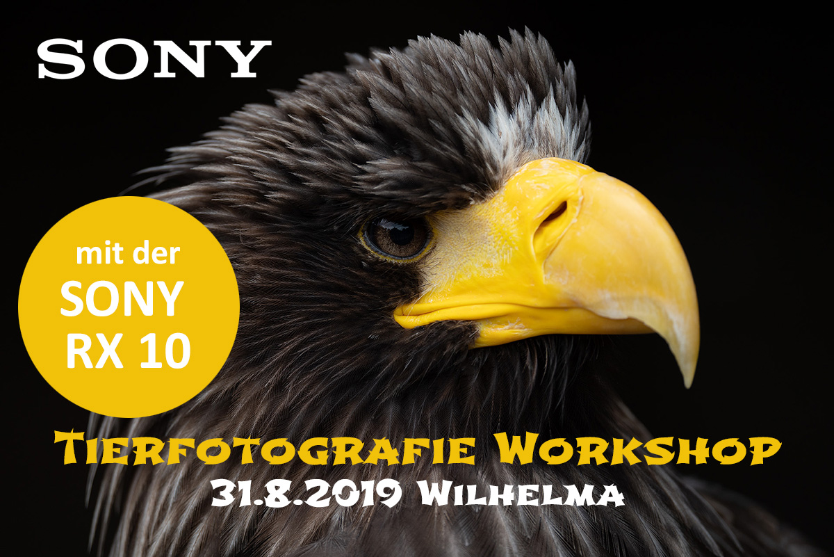 SoNY Tierfotografie Workshop